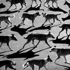 тени отбрасывают собак by Алексей Бедный (Alexey_Bednij) on 500px.com