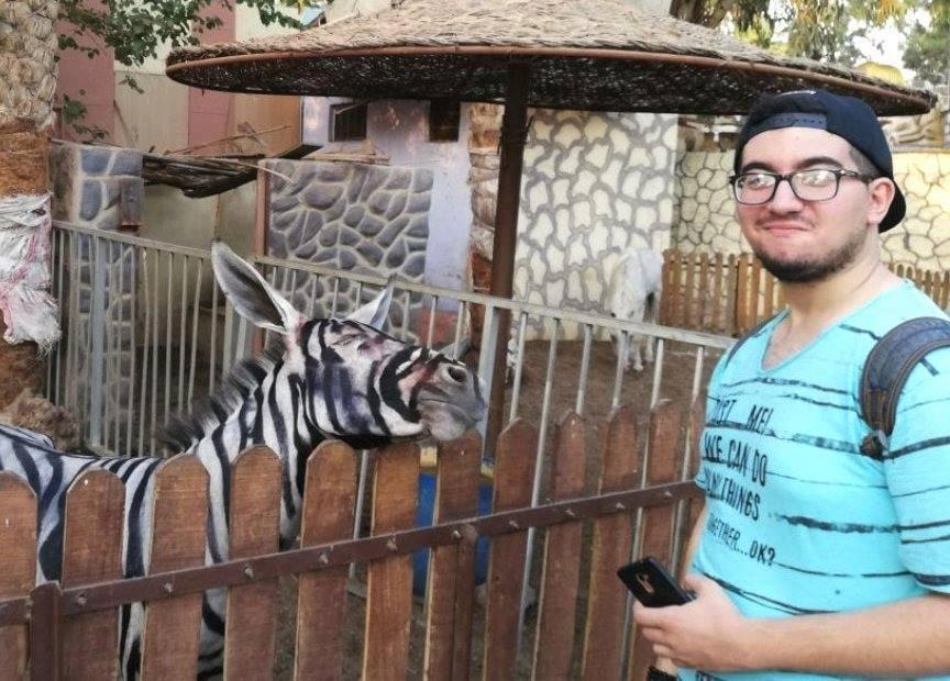 Egyptian Zoo Parades Donkey As Zebra After Painting It In Black And White Colours