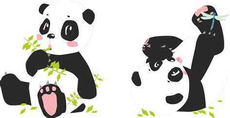 panda pandas bear  image  pixabay