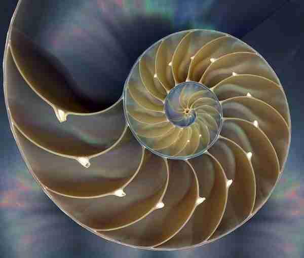 diaforetiko.gr : 1110 Όσοι πιστεύετε ότι τα πάντα στη φύση είναι τυχαία, διαβάστε αυτό το άρθρο...