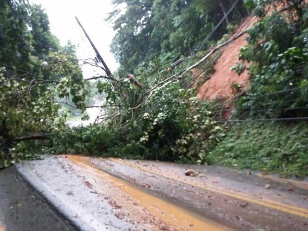 Chuvas provocam deslizamentos de terra na Rodovia Rio-Santos (Foto: Rodrigo Bisachi/ Vanguarda Repórter)