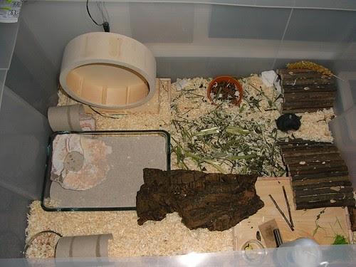 Naturnahe hamstergehege artificial christmas tree storage for Hamster bin cage tutorial