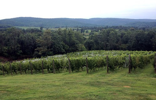 Vines at Chateau O'Brien