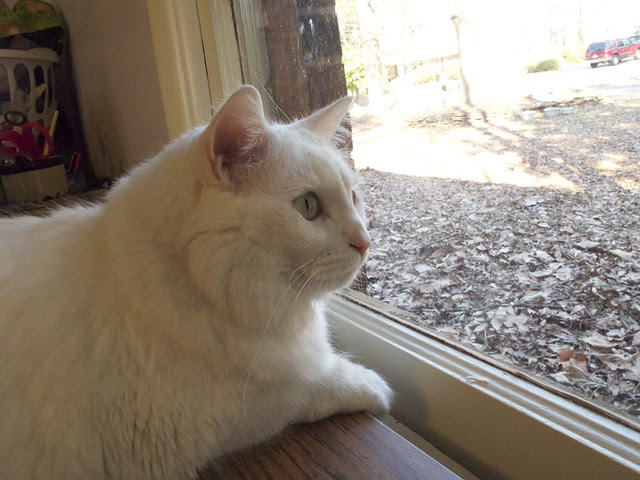 Nilla and the Squirrel 0029