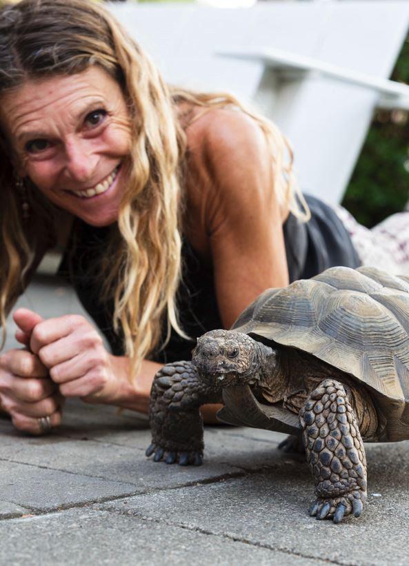 Drew Altizer Photography _WildCare - Tortoise.JPG