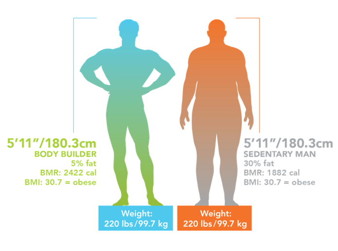 body fat percentage calculator using height and weight only