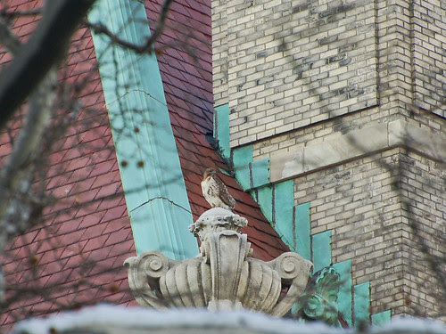 Red-Tail atop St. Luke's