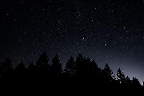 wallpaper langit berbintang pohon malam cahaya