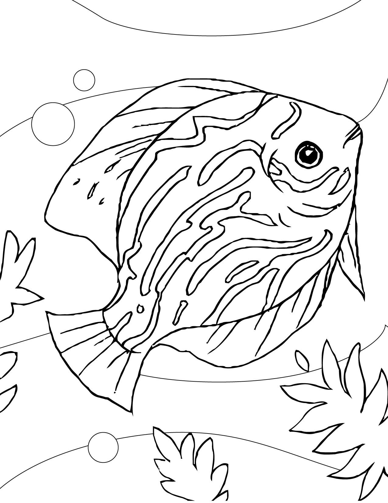 Aquarium Fish Coloring Pages at GetColorings.com   Free ...