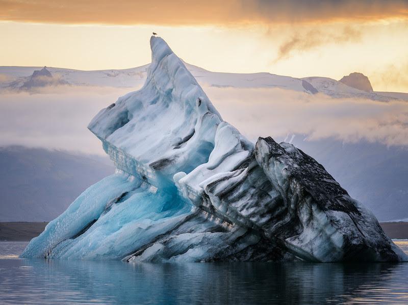 Iceberg birdie at Jokulsarlon