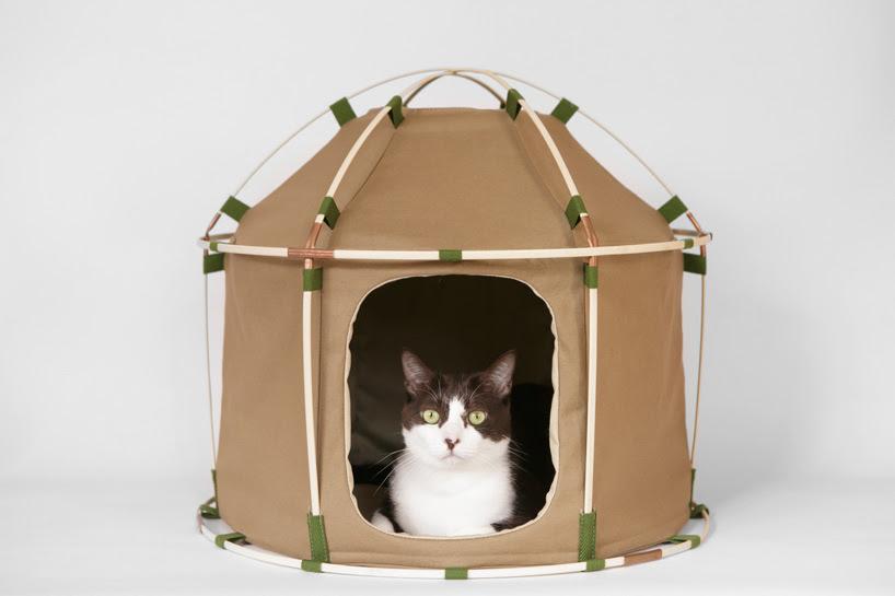 cat study house 41st century designboom