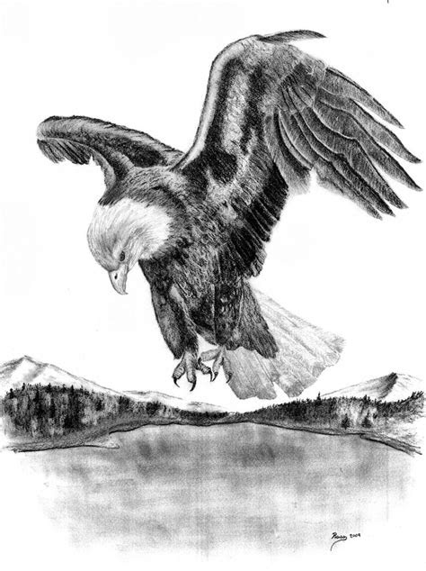 drawings  american bald eagles charcoal drawing