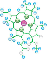 magnésio na clorofila