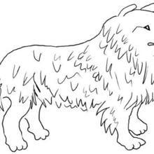 Dibujos Para Colorear Perro Y Gato Catastrofe Es Hellokids Com