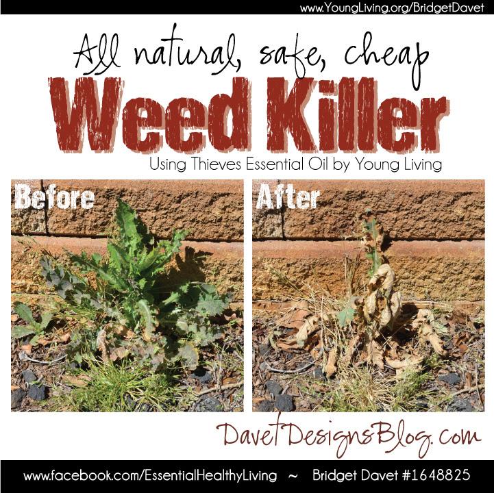 DIY All Natural Thieves Weed Killer
