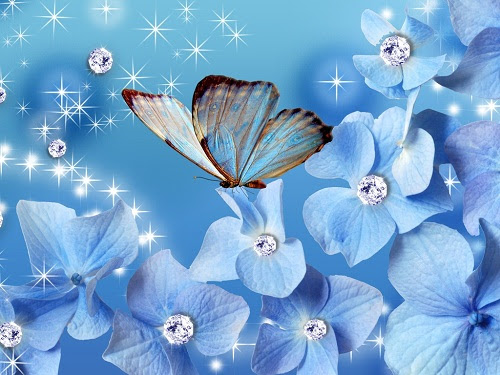 Yorkshirerose Images Flowers And Butterflies Wallpaper And