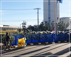 IKEAの生もみの木。剥き出しのが国産でネット入りのは海外(ベルギーとか)産だそうですよ