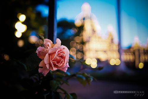 Evening Walk Through the Garden City
