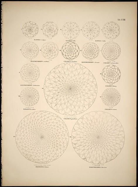 palm symmetry