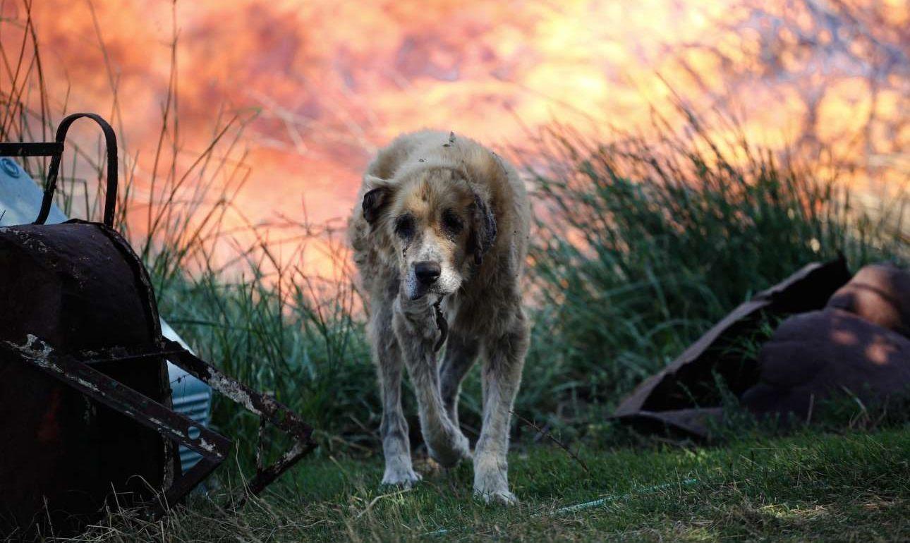 Και δύο «πρόσωπα» που σε τέτοιες περιπτώσεις ξεχνάμε: Ενας καψαλισμένος σκύλος σαν να βγαίνει μέσα από τις φλόγες, έντρομος, και...