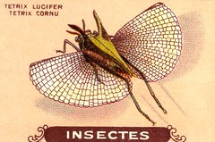 insecte 3