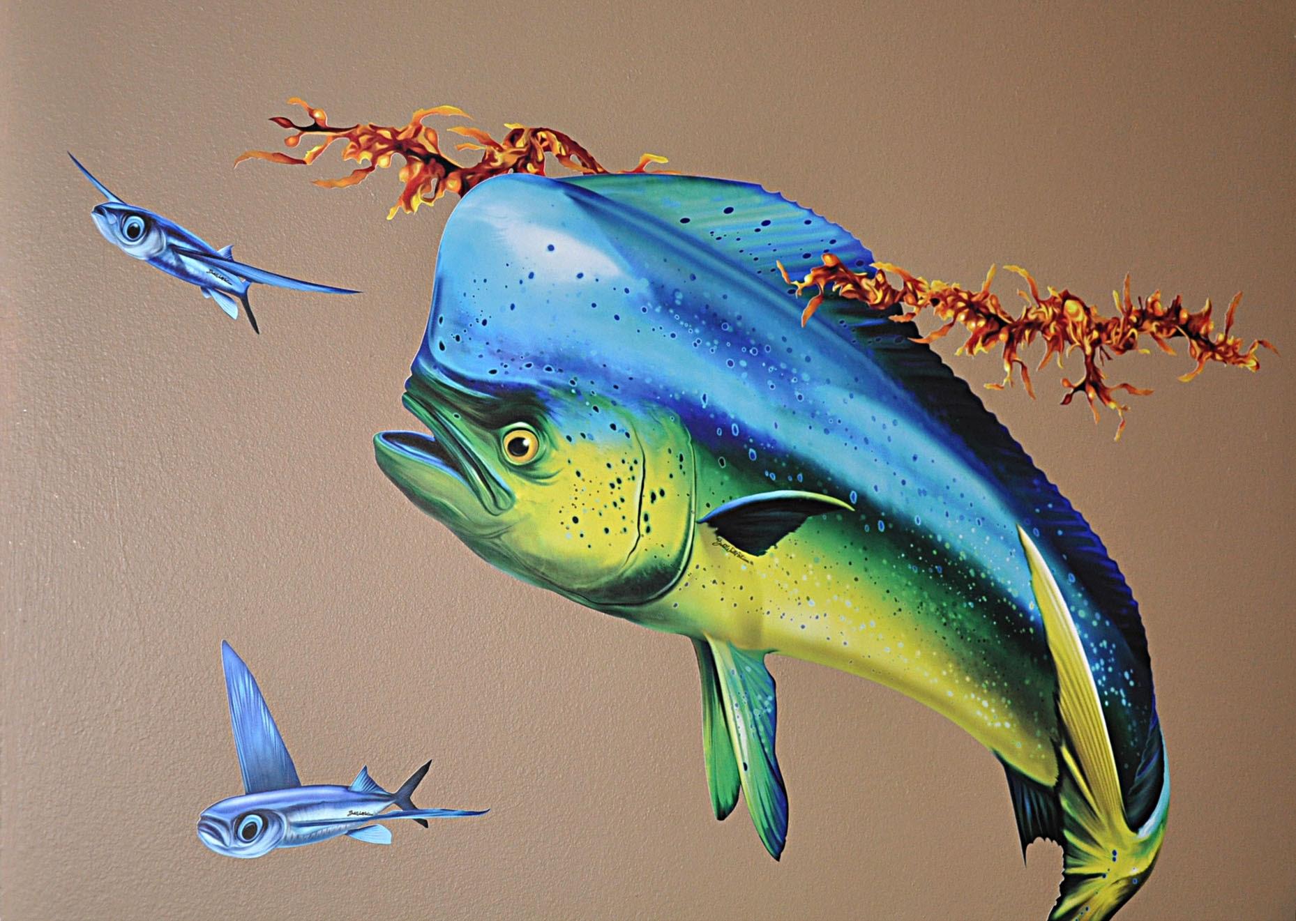 Mahi mahi wallpaper as desktop backgrounds - Mahi Cw 3 Dolphin Fish Pictures