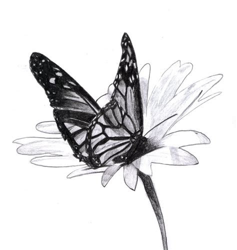 beautiful butterfly drawings  inspiration hative