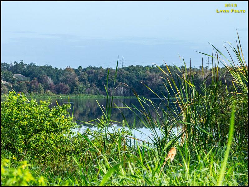 Lake Lotus