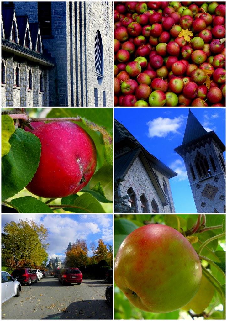 Apple Season at the Abbey
