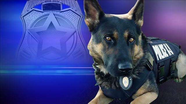 Image result for DeKalb County police dog dead, handler suspended