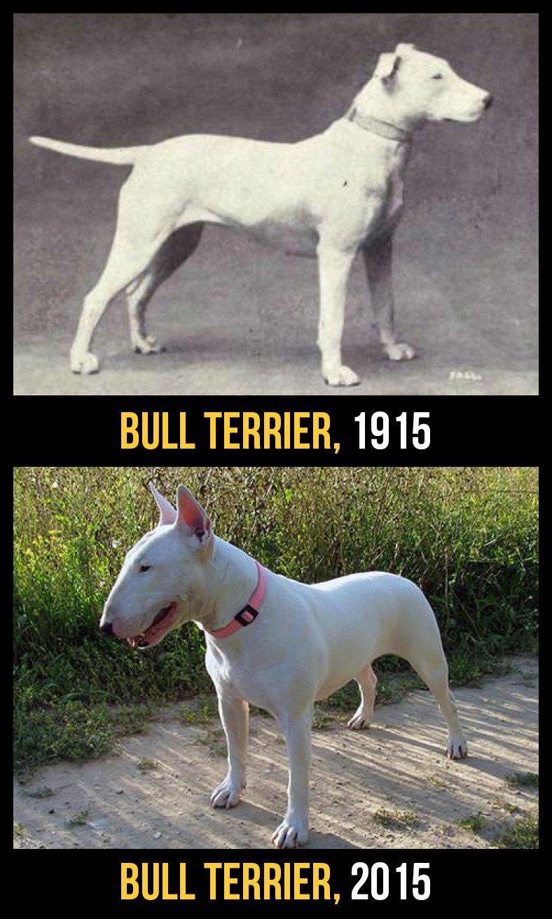 razas perro evolucion 10