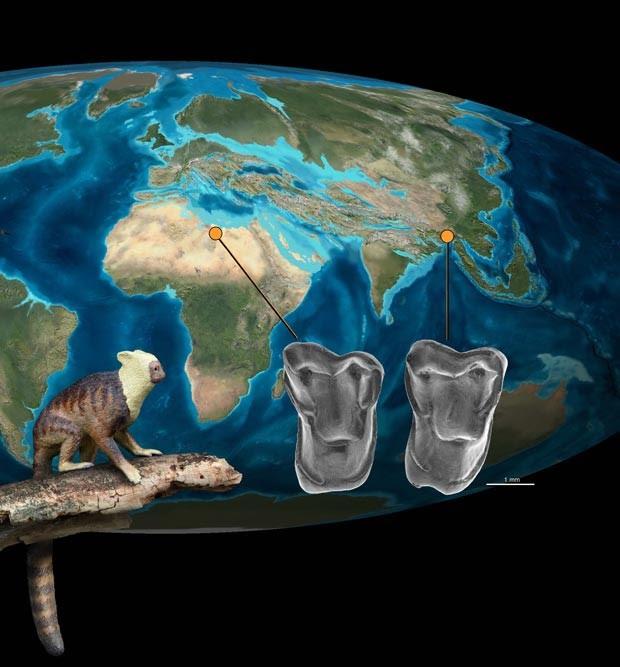 Localização dos fósseis encontrados, com uma ilustração de como seria o 'Afrasia djijidae' (Foto: Jean-Jacques Jaeger/Divulgação)