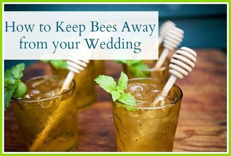 How to keep bees away from your wedding   Wedding Decor