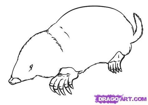 How to Draw a Mole, Step by Step, forest animals, Animals, FREE Online Drawing Tutorial, Added