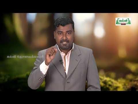 கவிதைப் பேழை Std 9 English Phrases And Clauses Kalvi TV