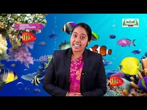4th English Prose Story Anbu and the Fish Unit 2 Part 11 Kalvi TV