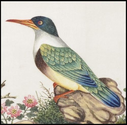 Bird Album g (detail)