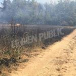 Côte-d'Or - Faits divers. Griselles : une dizaine d'hectares de champ et de sous-bois partent en fumée