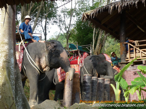 Elephant Trekking & Safari 12