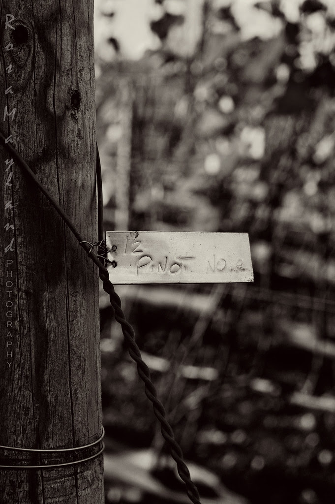 Vineyard Tag, Geneva