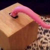 tentacle-1