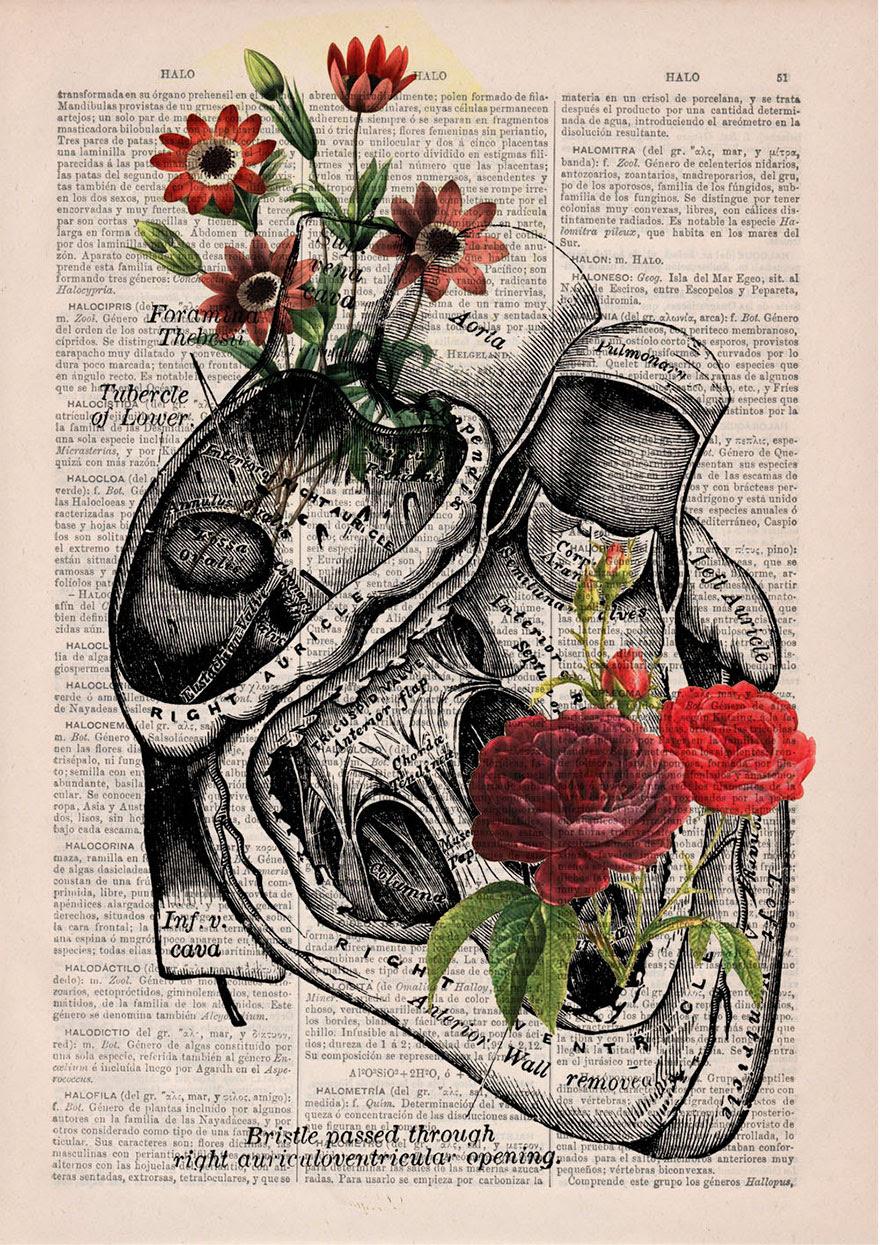 ilustraciones-anatomicas-flores-libros-viejos-prrint (3)
