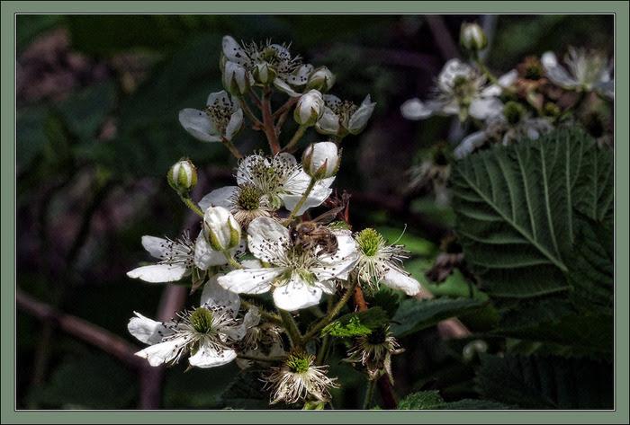 Пчела на цветке/3673959_3 (700x473, 122Kb)