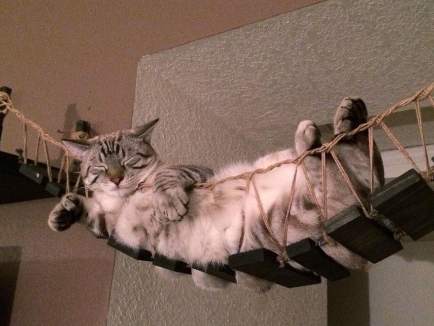 moveis-para-gatos-6