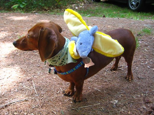 bananashark!