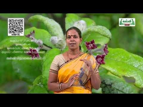 11th Botany வகைப்பாட்டில்(ம)குழுமப்பரிணாம வகைப்பாட்டில் அலகு 5 பகுதி 9 Kalvi TV