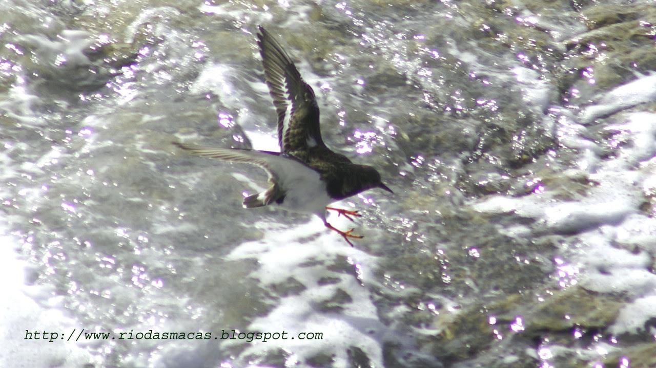Aves11PM01122014blog.jpg