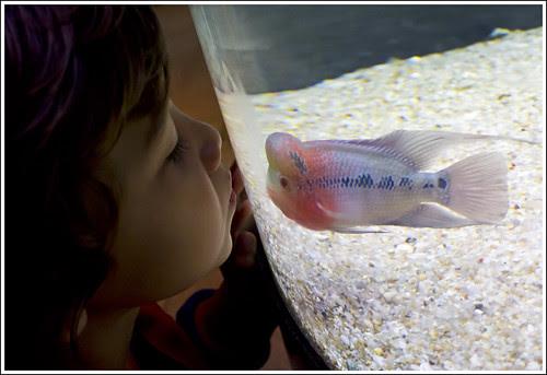 Kissing fish at Phuket Aquarium