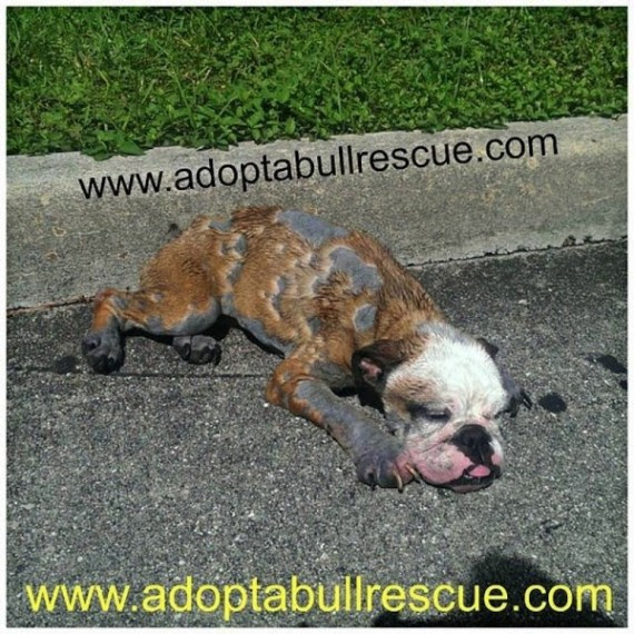 A man did an amazing thing when he found this dying puppy lying unconscious on the road. He immediately called for help.