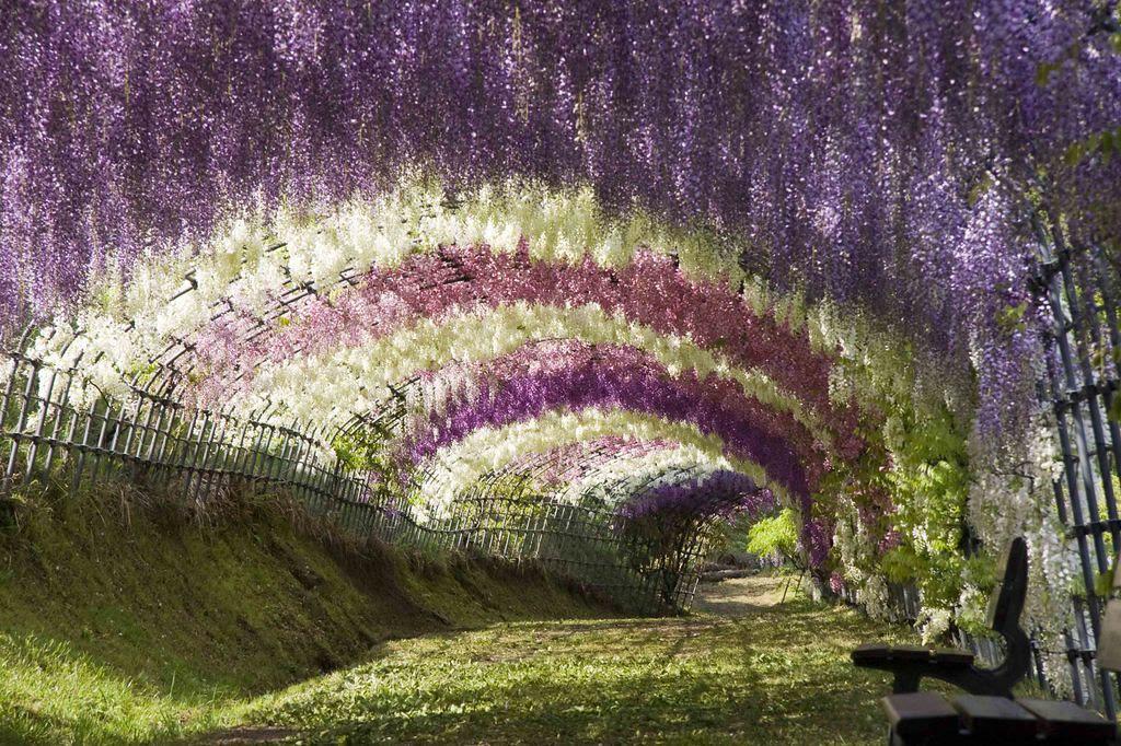 Risultati immagini per парк в японии